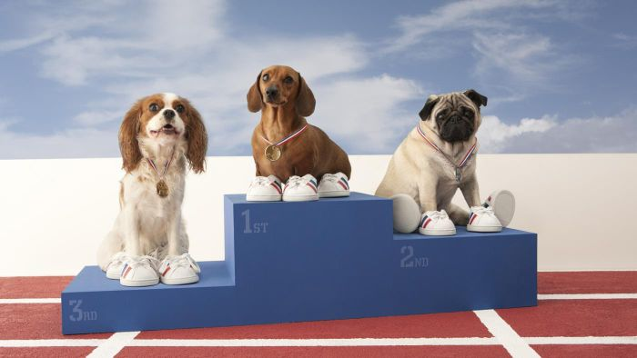 What Is an AKC Ranking?