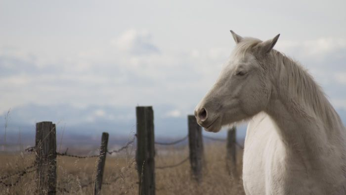 What Is an Albino Horse?