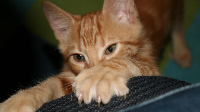 What Are Some Alternatives to Declawing?