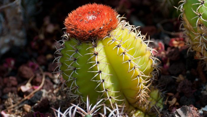 What are some animals that eat cactus?