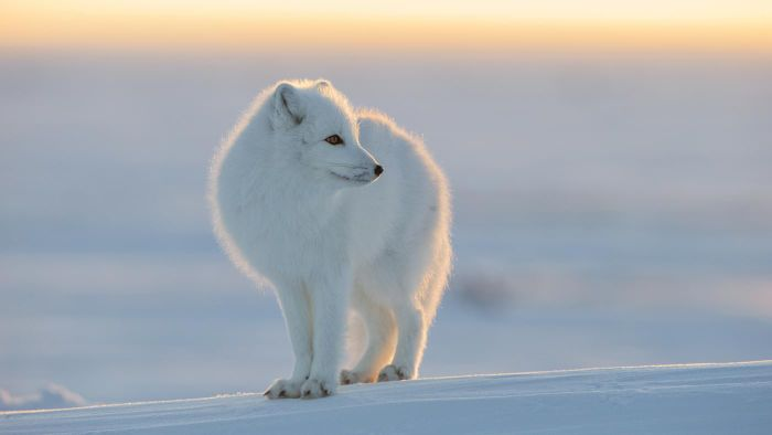 What Animals Live at the North Pole?