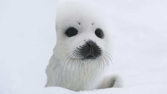 Which Animals Live in the Polar Regions?
