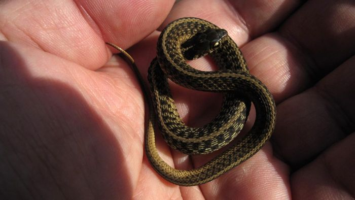What Are Baby Snakes Called?