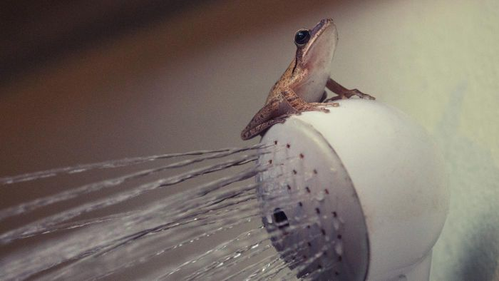 How Does a Bathroom Fan Vent Eliminate Humidity?