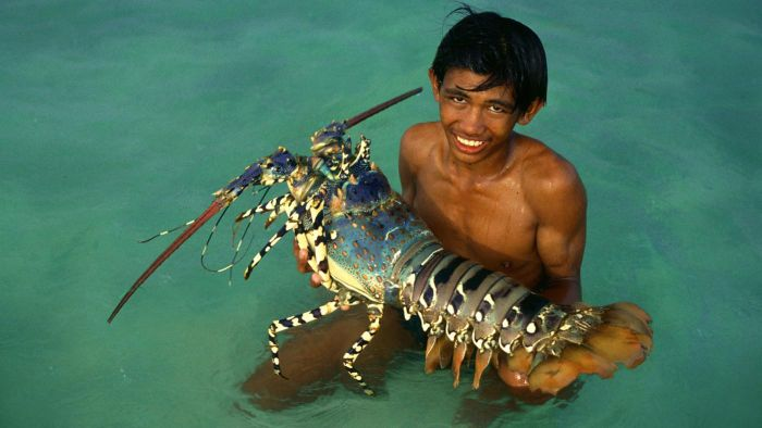 How Big Was the Largest Lobster Ever Recorded?