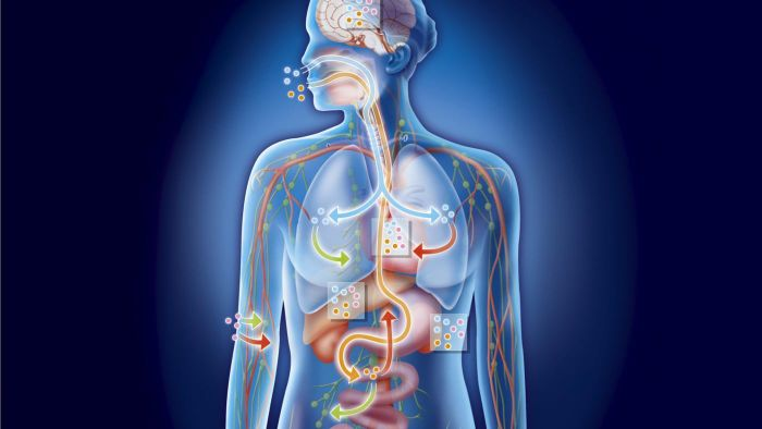 What Are Bile Salts?