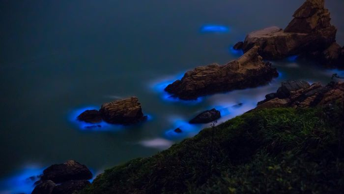 What is bioluminescent algae?