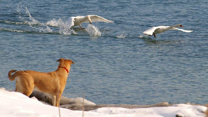 """What Is """"Bird Dogs"""" in Prospecting?"""