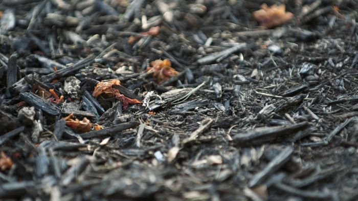 What is black mulch dyed with?