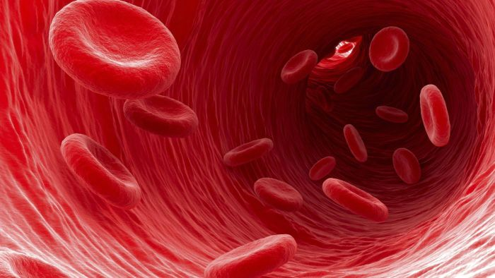 Which Type of Blood Cells Carry Waste Away From Cells?