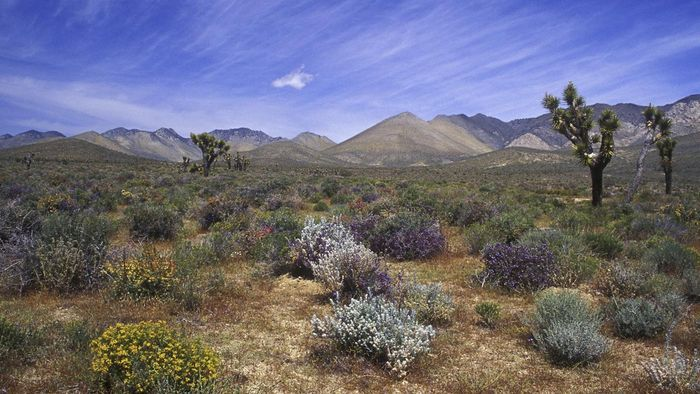 Where Does Boron Occur Naturally?