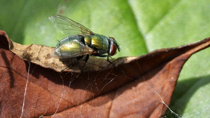 What Is a Bot Fly Infestation?