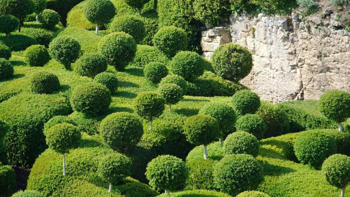 What Are Boxwood Diseases?