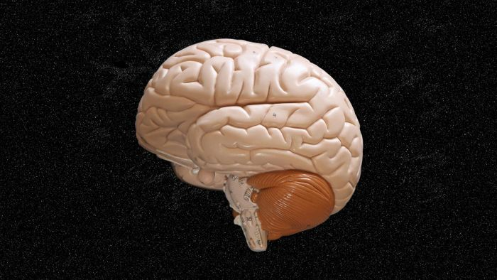 Is the brain made of fat?