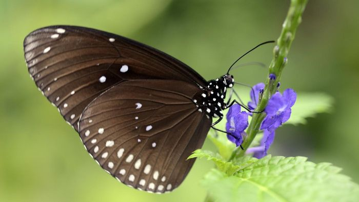 How Do Butterflies Breathe?