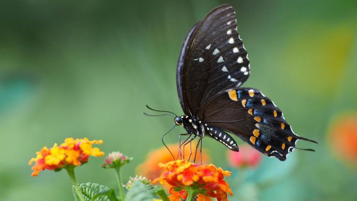 What Does a Butterfly Symbolize?