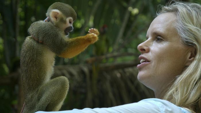 Where Can I Buy a Pet Monkey in the UK?
