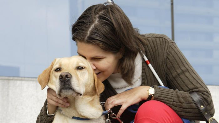 Can a Diabetic Dog Become Blind?
