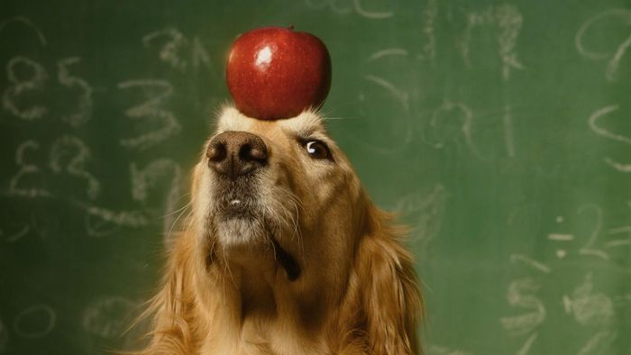 Can Dogs Eat Apples Safely?