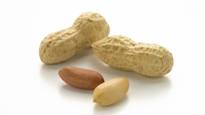 Can Dogs Eat Peanuts?