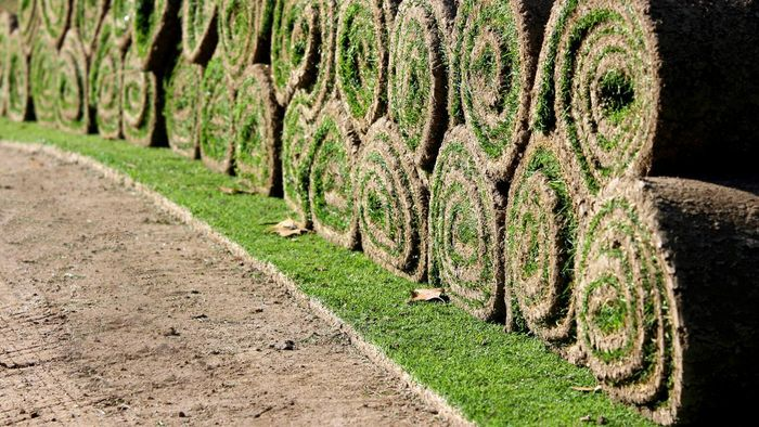 Can I Fertilize After Laying Sod?