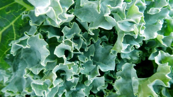 Can you freeze kale?