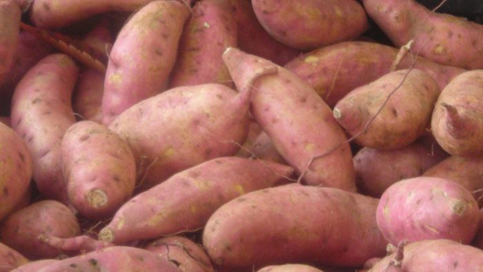 Can you freeze raw sweet potatoes?