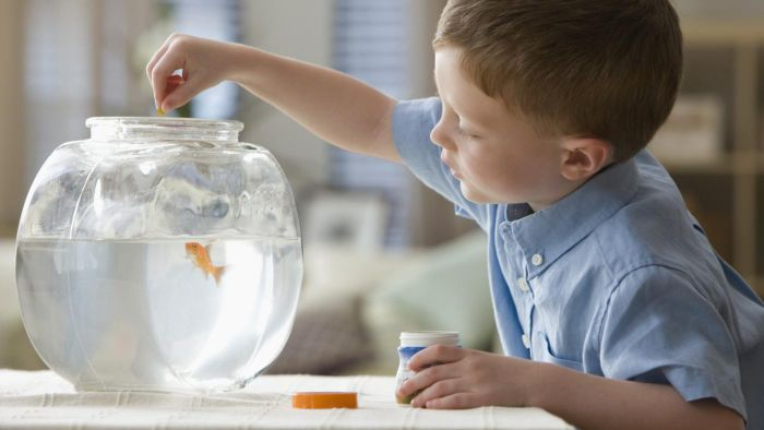 Can Goldfish Eat Tropical Fish Food?