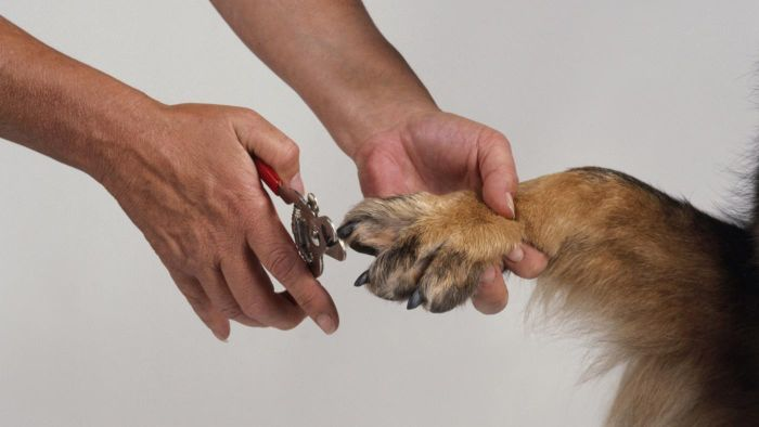 Can I Groom My Dog With Human Clippers?