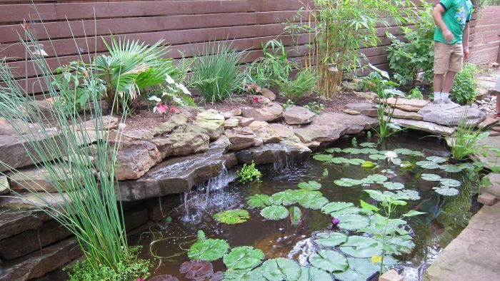 How Can You Find Local Pond Builders?