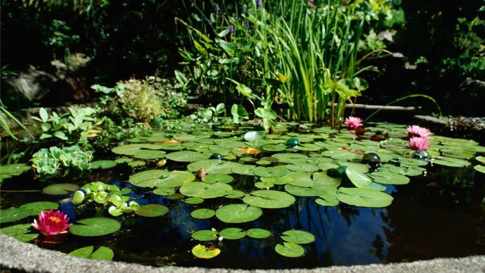 How Can I Make My Pond Water Clear?