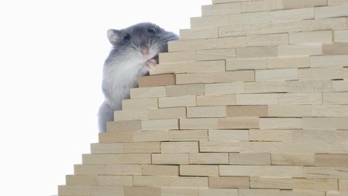 Can Mice Climb Stairs?
