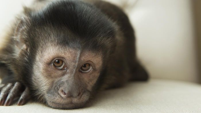 Where Can You Find Monkeys for Adoption?