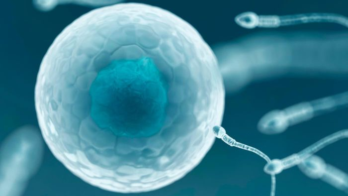 Why can only one sperm fertilize an egg?