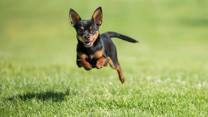 Where Can You Find Printable Pictures of Dogs?
