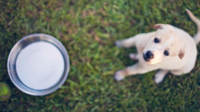 Can puppies drink milk?