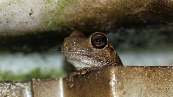 Can Salt Kill Frogs?