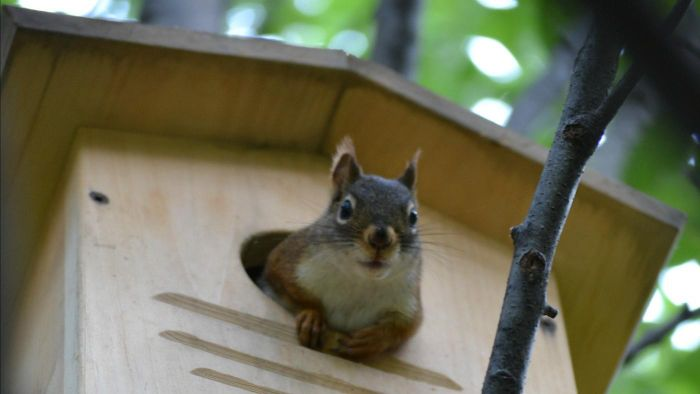 Where Can You Find Free Squirrel House Plans?
