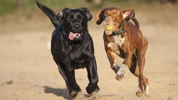 Can Two Male Dogs Live Together?