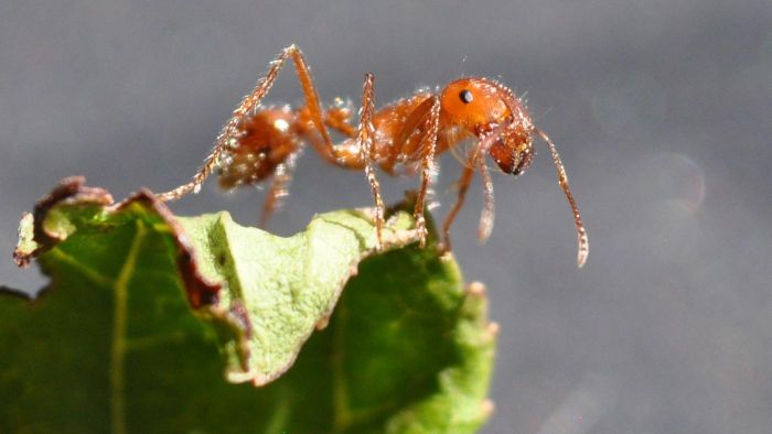What Can You Use for Fire Ant Bait?