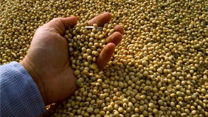 Is It Safe to Eat Raw Soybeans?