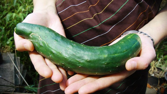 How Do You Care for a Cucumber Plant?