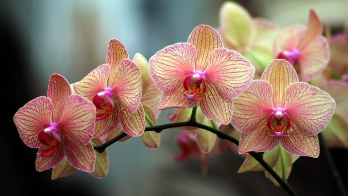 What Are the Care Instructions for Orchids?