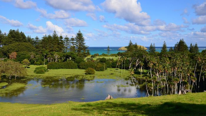 How Do You Care for Norfolk Island Pine Trees?