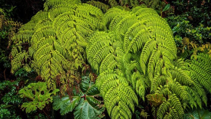 How do you care for an outdoor fern?