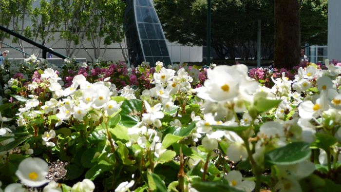 How Do You Care for a Yerba Buena Plant?