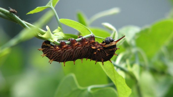 Where Do Caterpillars Live?