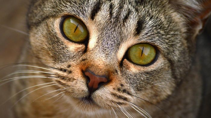 Are Cats Color-Blind?