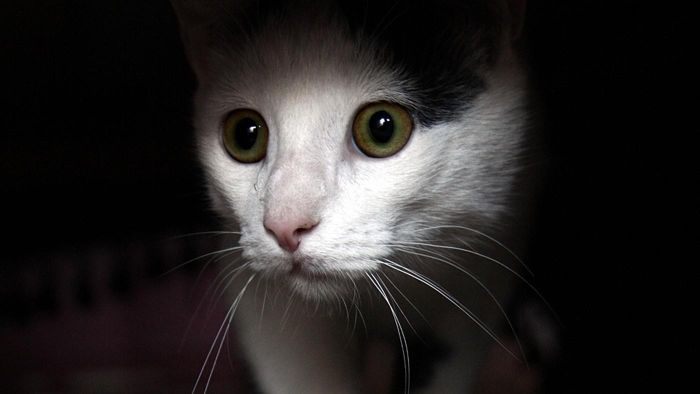 Do Cats See in the Dark?