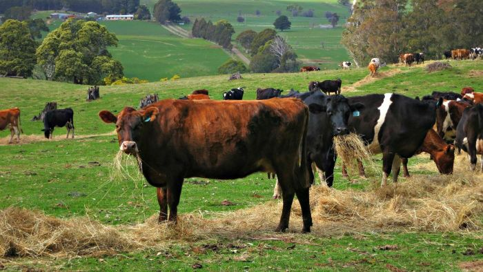 What is cattle farming?